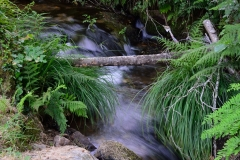 agua (4)